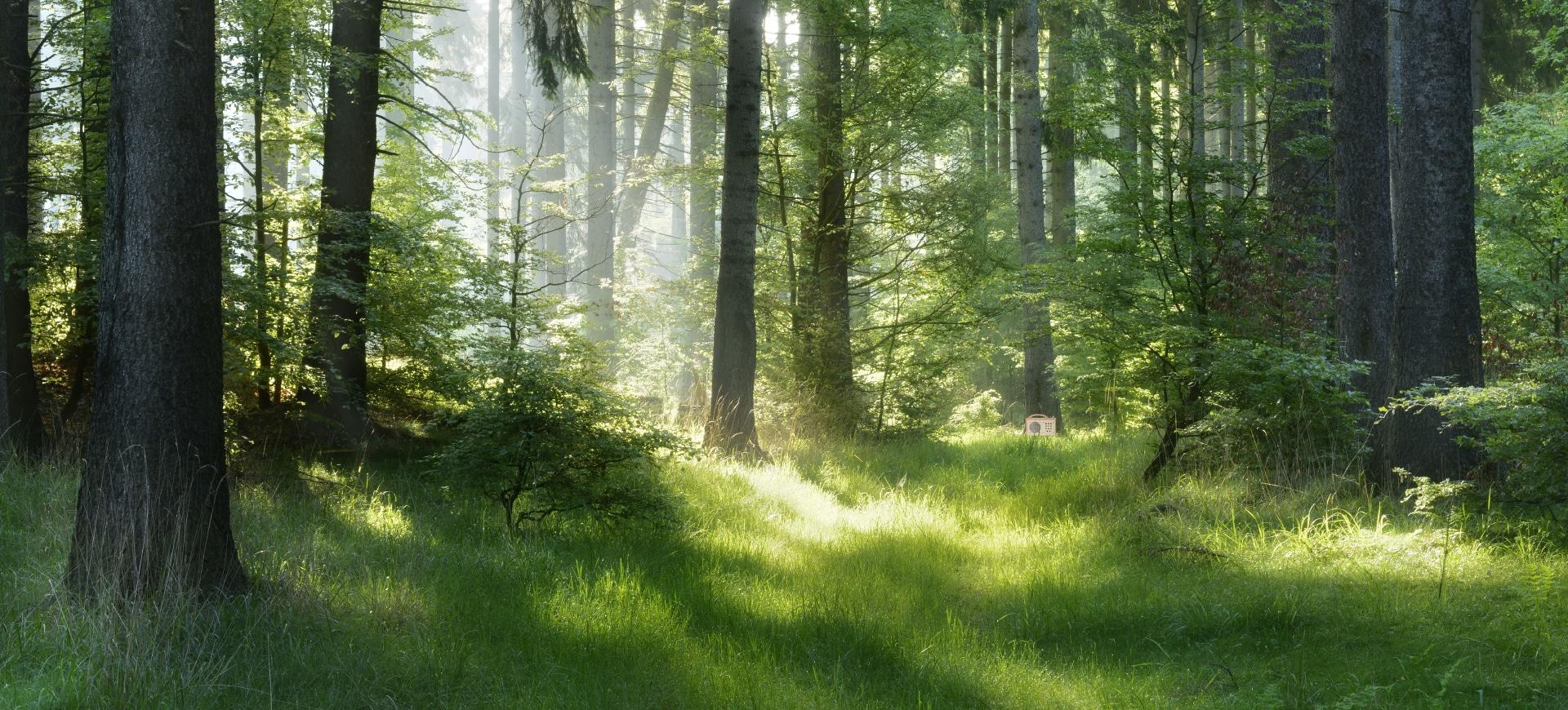 hörbert au pied d'un arbre au fond de la forêt